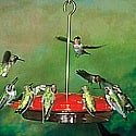 hummingbird bird feeder