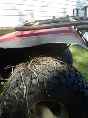 Nest on Tire