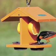 Baltimore Oriole Bird Habits Nesting And Feeding