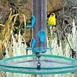 bird seed tray catcher