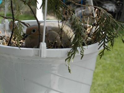 Nesting in the Fake Basket