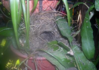 A joy watching the pair of wrens building their nest.