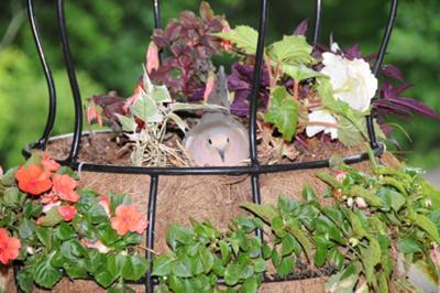 Mama bird in her fancy maternity basket