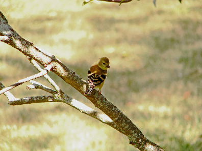 Perching on a little branch