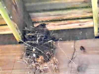 Bay before the baby Robins were hatched