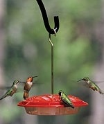 bee proof hummingbird feeder
