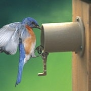 bluebird-protector