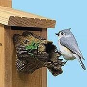 predator guard for birdhouses