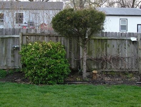 Cardinal Tree and Area