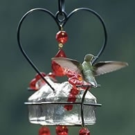 deluxe hummingbird feeder