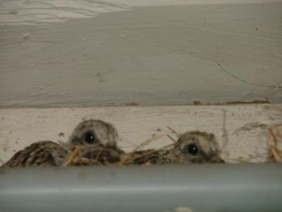 071211 and one left the nest 0716 and the other 071711