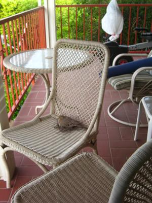 Dove in wicker chair