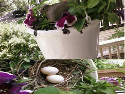 Bird in flowers, eggs in nest