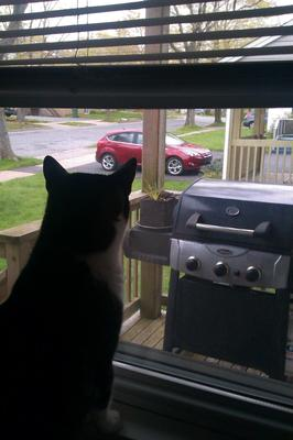 Cat Watching Doves