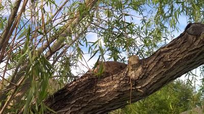 Nesting and incubating