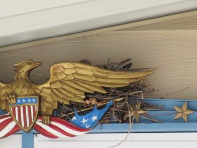 Safe behind the American Eagle!