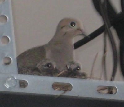 Mama and 2 Babies