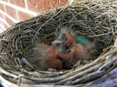 Day 1 Hatched