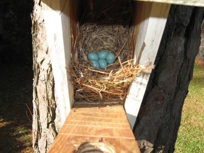 Five Eggs, April 12, 2008