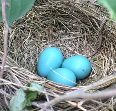 Friend's nest