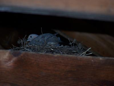 view of dove nest