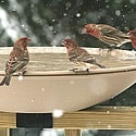 heated bird bath deck mounted
