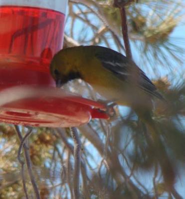 Borrowing a little nectar