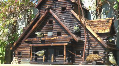 Birdhouse Ideas Building