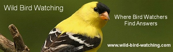 wild bird watching logo