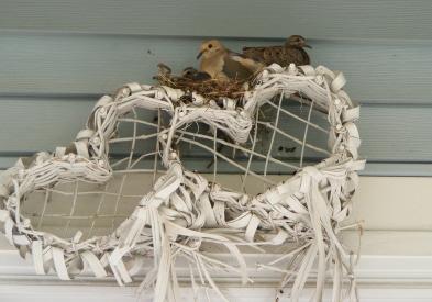 Doves Nesting on House