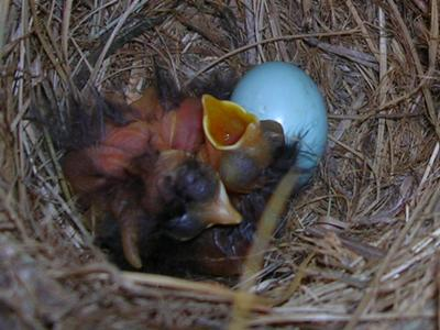 The day the babies were hatching