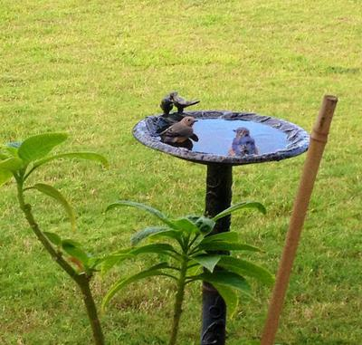 Bertha and male baby in birdbath