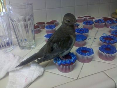 Squirt helped me with frosting my cupcakes