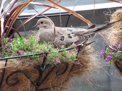 Nesting in the Planter