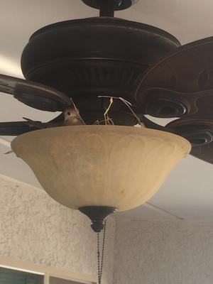 Patio ceiling light/fan fixture