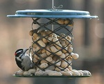 Bluejay peanut feeder