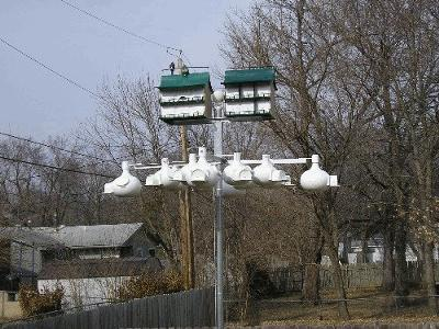 2009 Purple Martin Set Up