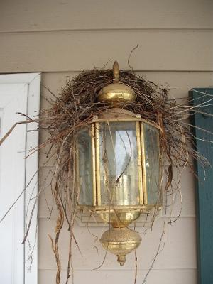 Robin's Nest on Porch Light