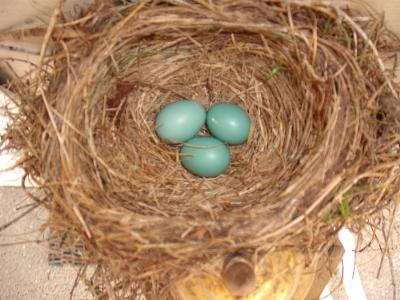 3 Beautiful Eggs