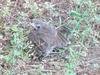 baby near brush pile