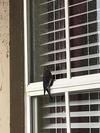 Dori on my window