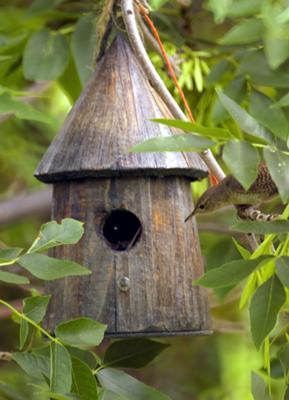 Pretty wrens