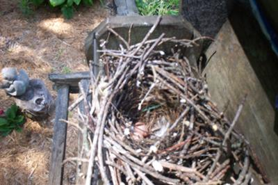 Wren Nest In The Birdfeeder