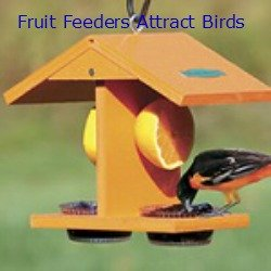 bird fruit feeder