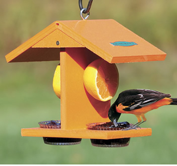 fruit feeder for orioles