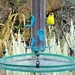 bird seed tray catcher