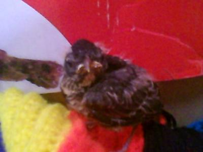 My First Baby Birdy!