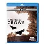 dvd a murder of crows