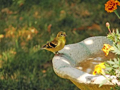 Checking out the birdbath