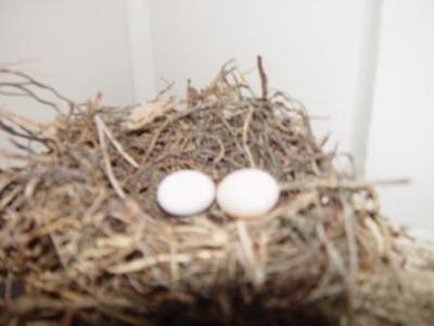 Blurry eggs